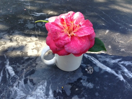 Camilla Flower in a white tea cup on a marble table