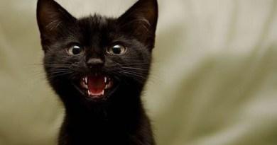 gattino-nero - antisfiga