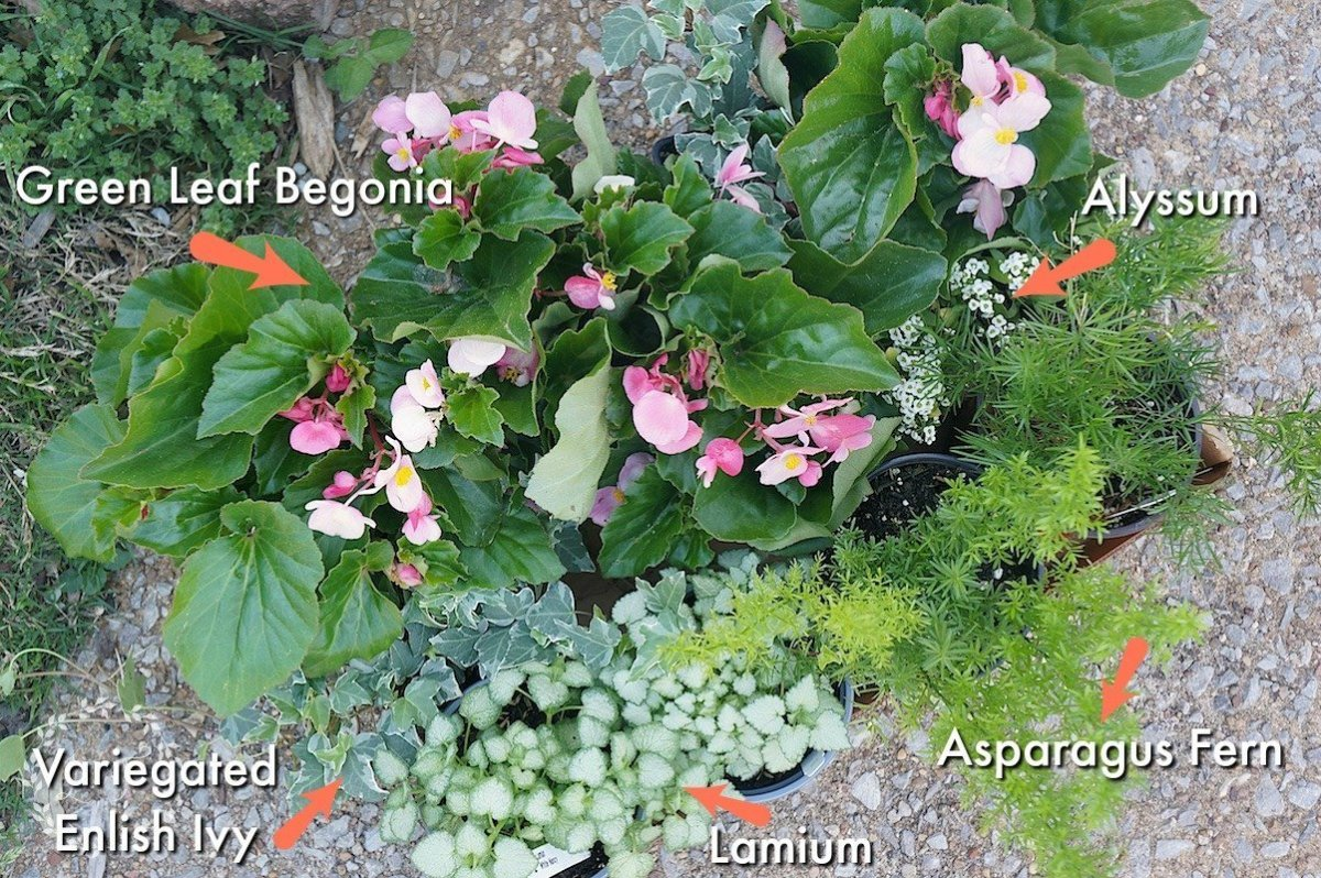 6 Step Recipe for Partial-Sun Container Garden Plus Planting Tips