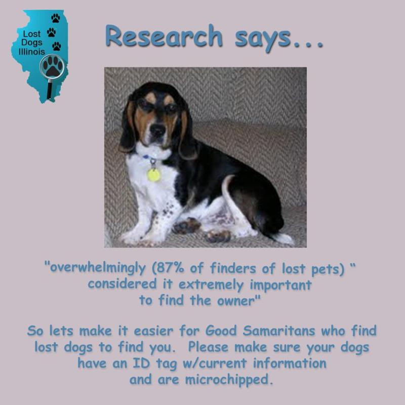 Dark Ilresearch Usefull Tools Lost Dogs Illinois What To Say When One Loses A Pet What To Say When Someone Loses A Pet Cat