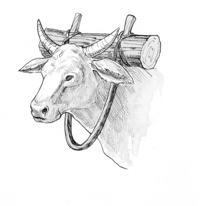Medieval tools:  Oxen drawing