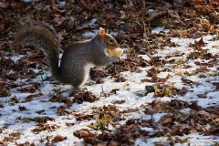 Squirrels Finding food