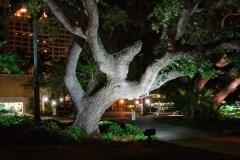 Trees at Night in Sarasota Florida.