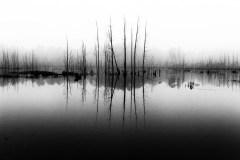 dead-cedar-trees-2759