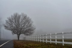 foggy-tree-2701