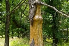 dead-tree-1010067