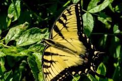 butterfly-1020739