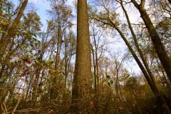 hoot-owl-tree-1706