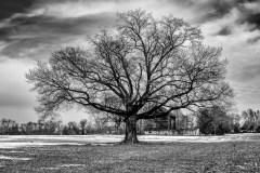 lone-tree-7533