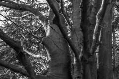 tree-trunks-5420-