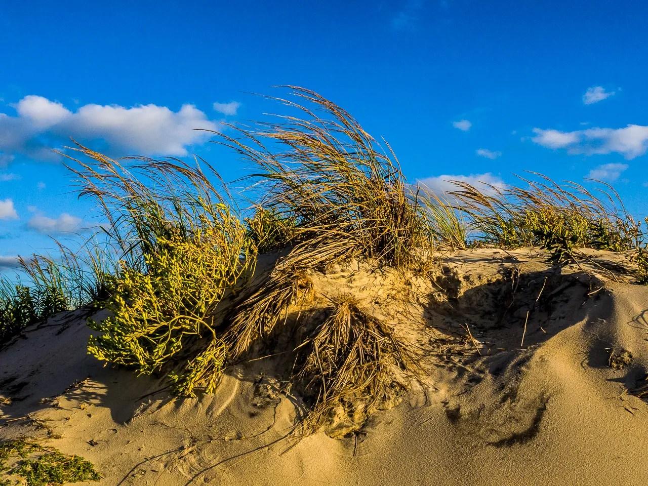 assateague-dunes-2350
