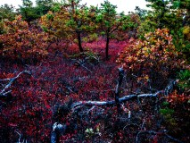 pine-lands-nj-