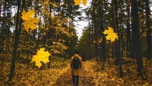 autumn-1804592_960_720