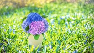 spring-flowers-2222884_960_720