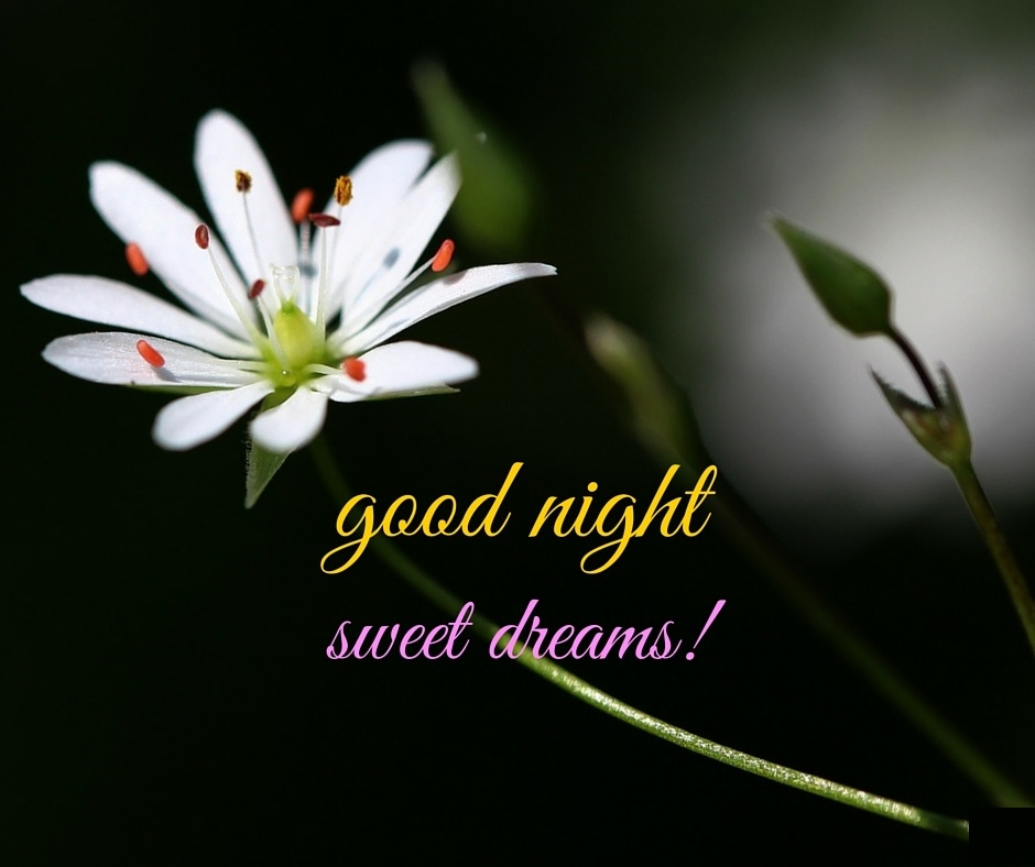 Gud Nite Wallpaper With Quotes Good Night Flowers Images Pictures And Wallpapers Gud