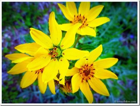 flower day 3
