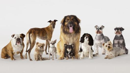 many-types-dogs_a3850d3a4da33cda