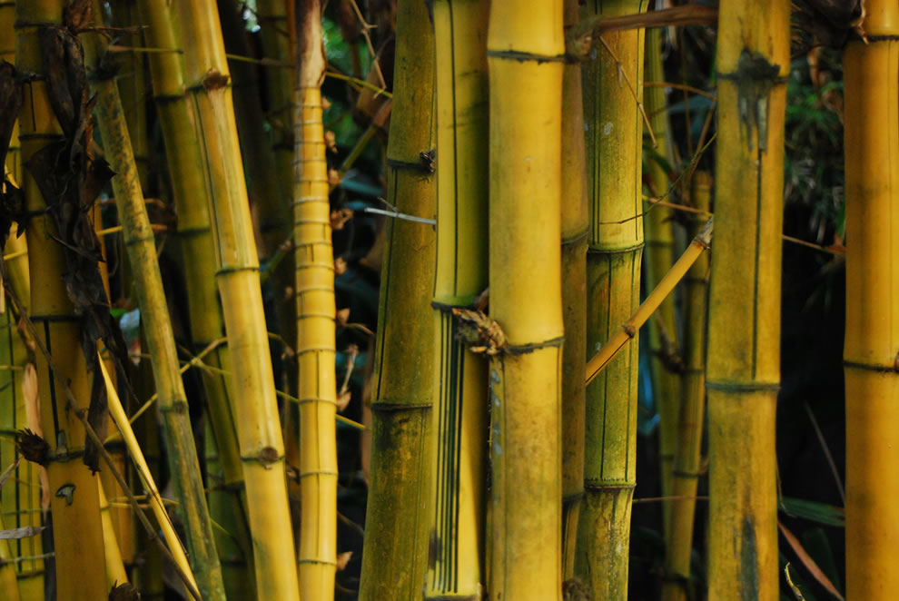 Akaka Falls Wallpaper Beautiful Bamboo Forests 40 Pics