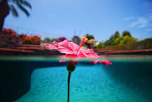 Good Morning Sunday Wallpaper With Quotes Flower In The Pool Pictures Photos And Images For