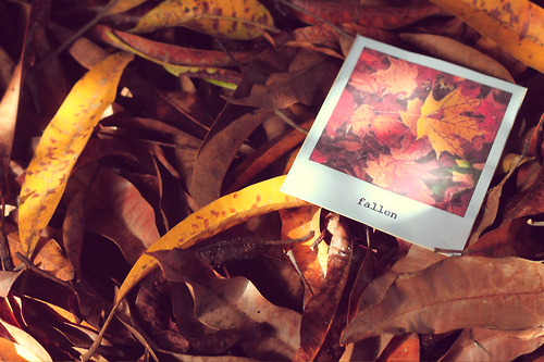 Fall Facebook Wallpaper Autumn Polaroid Pictures Photos And Images For Facebook