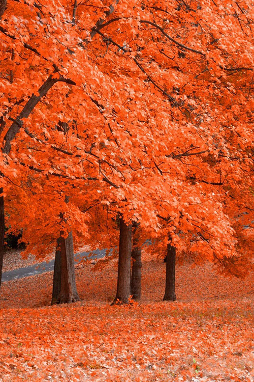 Orange Fall Wallpaper Autumn Trees Pictures Photos And Images For Facebook