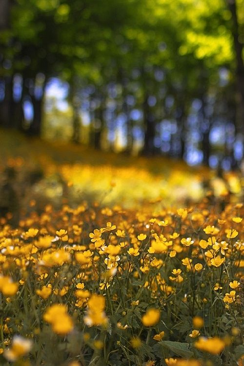 Cute Valentinesday Wallpaper Field Of Yellow Flowers Pictures Photos And Images For