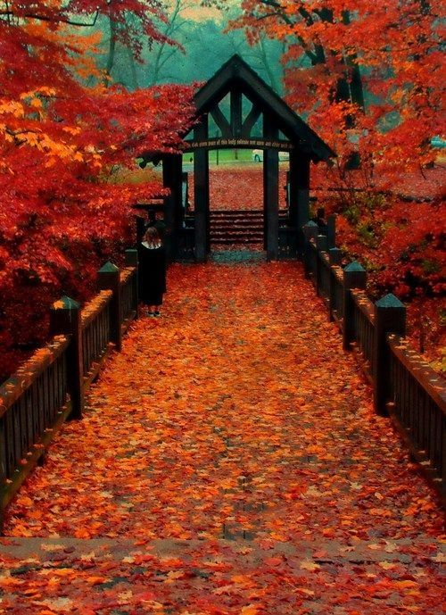 Thanksgiving Fall Wallpaper Autumn In Wisconsin Park Pictures Photos And Images For
