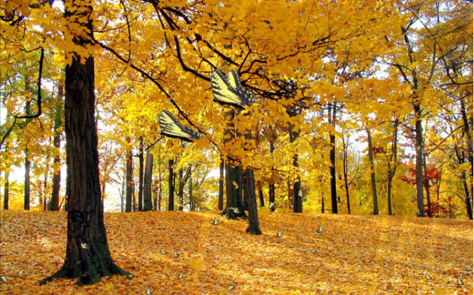 Fall Nature Scenes Wallpaper Golden Butterfly Forest Pictures Photos And Images For