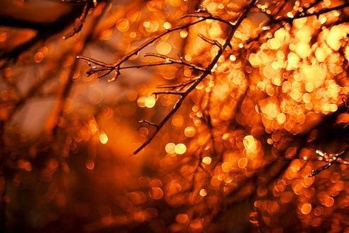 Free Fall Leaves Desktop Wallpaper Autumn Bokeh Pictures Photos And Images For Facebook