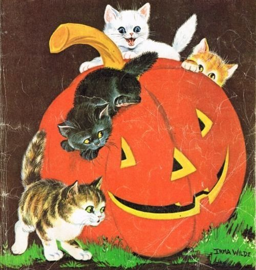 Cute Wedding Cartoon Wallpaper Vintage Halloween Art Pictures Photos And Images For
