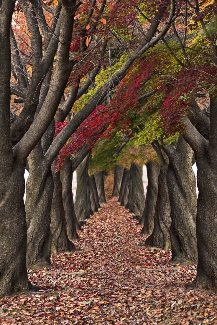 Cute Valentines Day Wallpapers Twisted Autumn Trees Pictures Photos And Images For