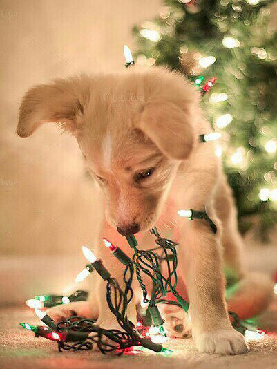 Cute Crazy Girl Wallpaper Puppy With Christmas Lights Pictures Photos And Images