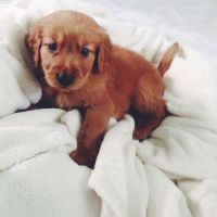Adorable Little Puppy Pictures, Photos, and Images for ...