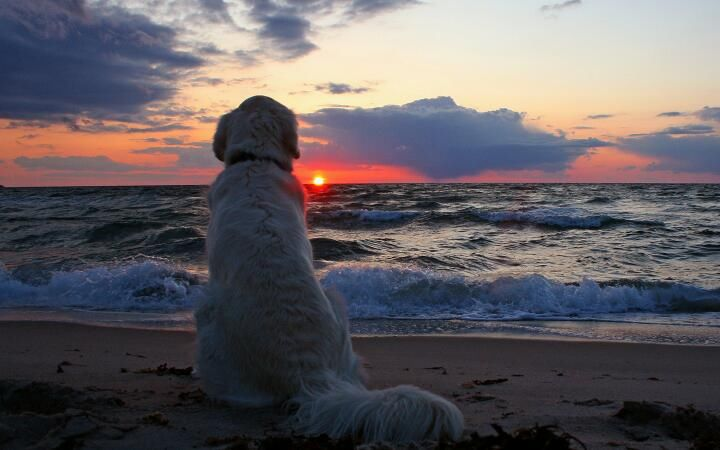 Im Alone Quotes Wallpaper Hd Dog Enjoying Sunset On The Beach Pictures Photos And