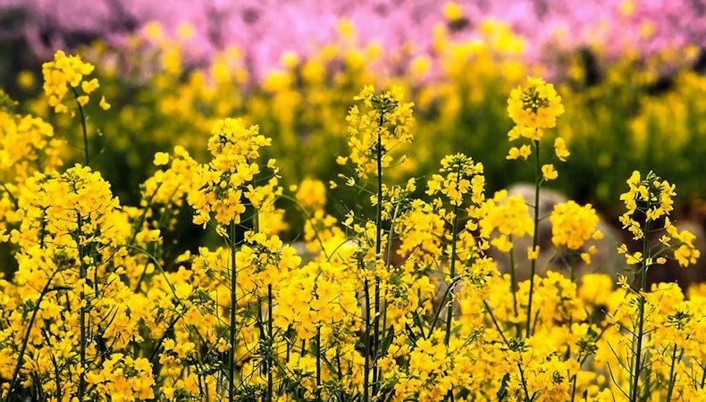 Cute St Patricks Wallpaper Yellow Spring Flowers Pictures Photos And Images For