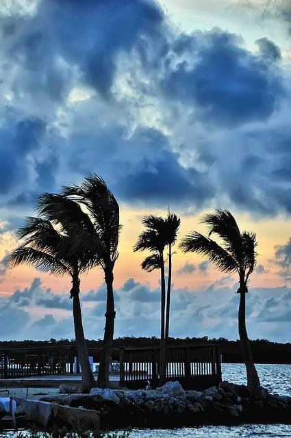Create Iphone Wallpaper Quote Windy Tropical Night Pictures Photos And Images For