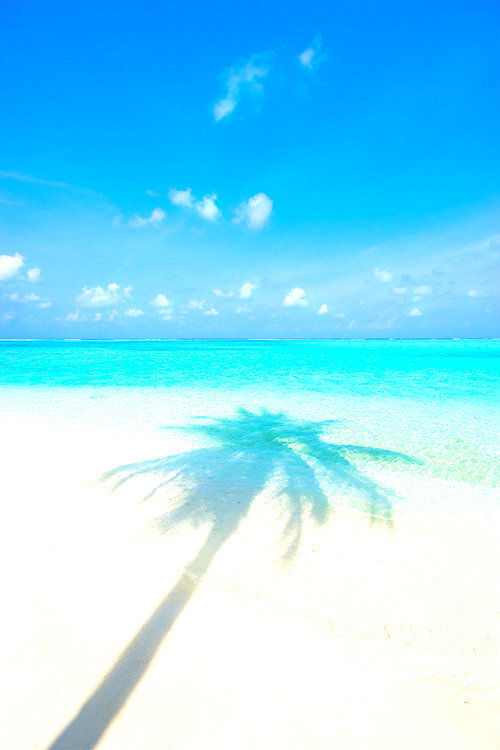 Iphone Wallpaper Fitness Quotes Palm Tree Shadow Pictures Photos And Images For Facebook