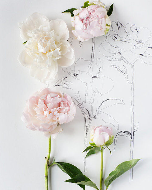 Peony Love Quote Wallpaper Drawing Flowers Pictures Photos And Images For Facebook