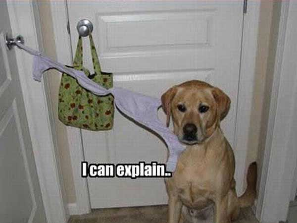 Dog What Are You Doing Pictures Photos And Images For