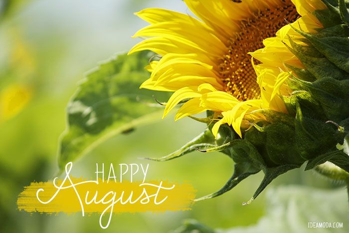Good Morning Wallpaper With Cute Girl Happy August Pictures Photos And Images For Facebook