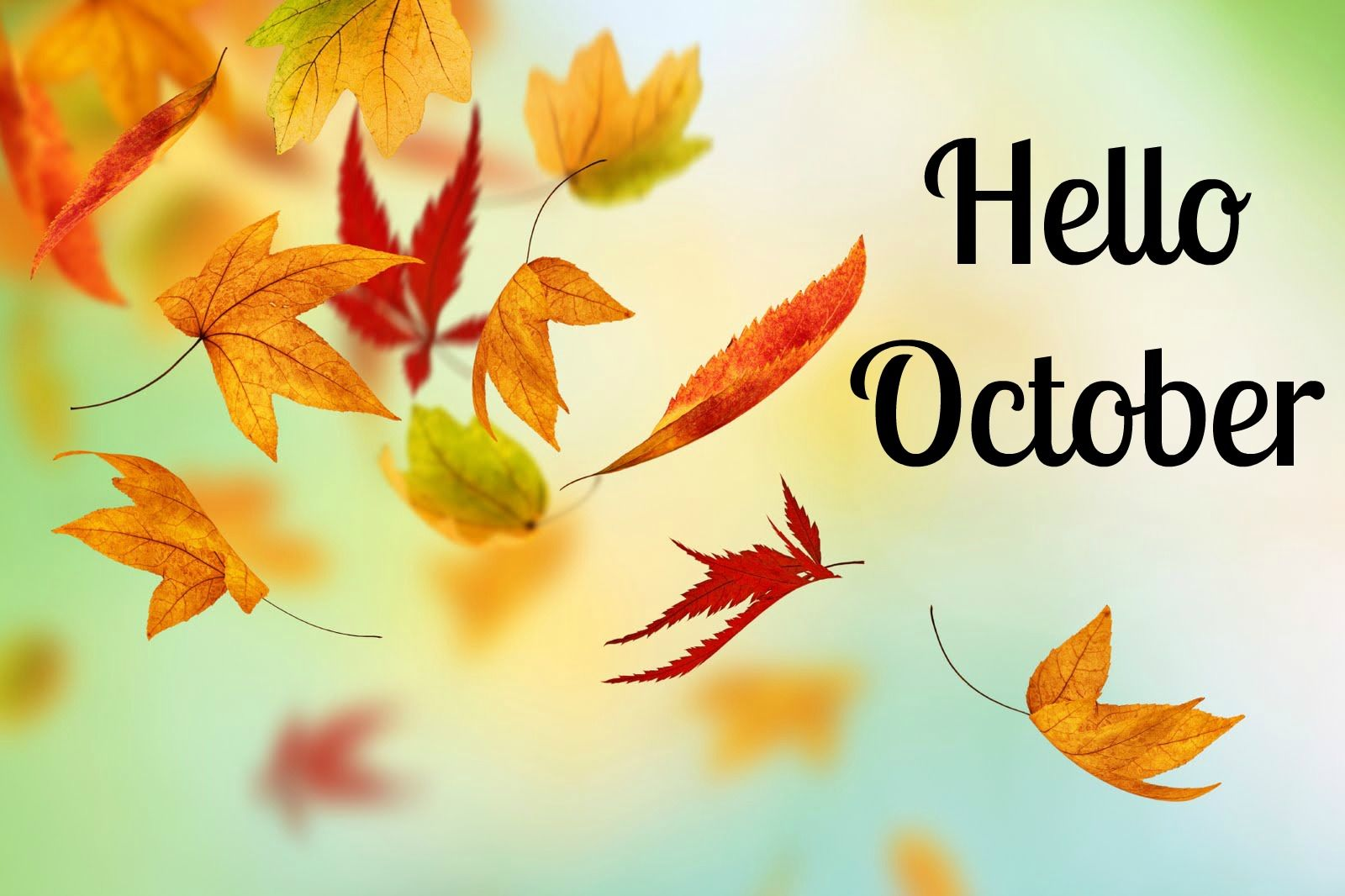 Falling Leaves Wallpaper For Iphone Hello October Quote With Falling Autumn Leaves Pictures