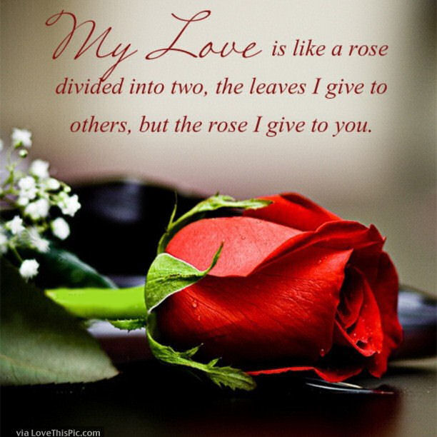 Tagalog Love Quotes Wallpaper Free Download My Love Is Like A Rose Pictures Photos And Images For