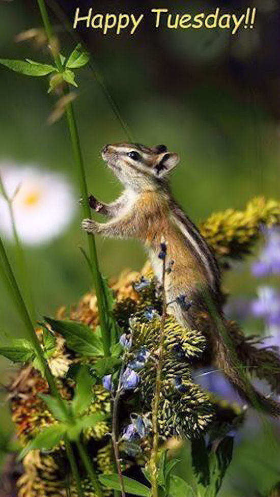 Cute St Patricks Wallpaper Happy Tuesday Squirrell Pictures Photos And Images For