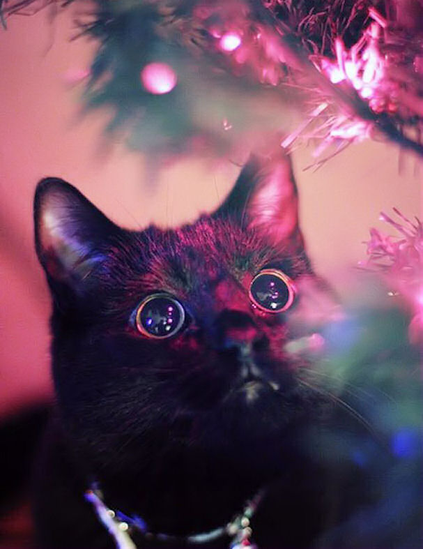 Cute Cat With Good Morning Wallpaper Christmas Cat Pictures Photos And Images For Facebook