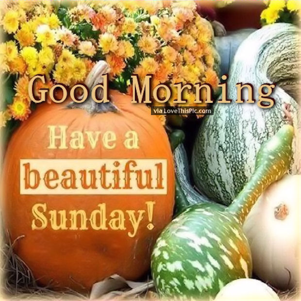 Fall Flowers And Pumpkins Wallpaper Good Morning Have A Beautiful Autumn Sunday Pictures