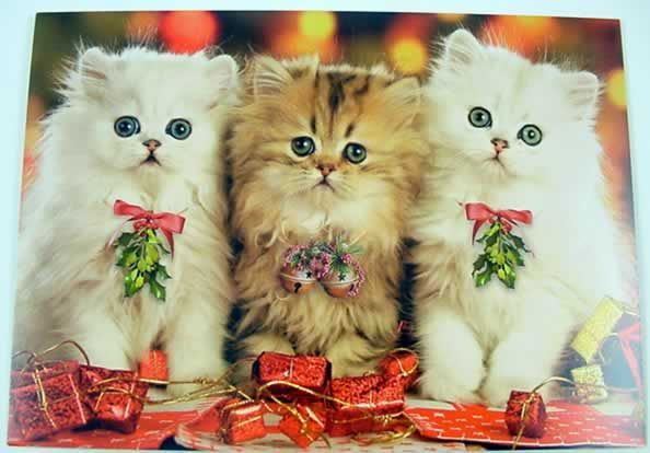 Cute Cat With Good Morning Wallpaper Christmas Kitties Pictures Photos And Images For