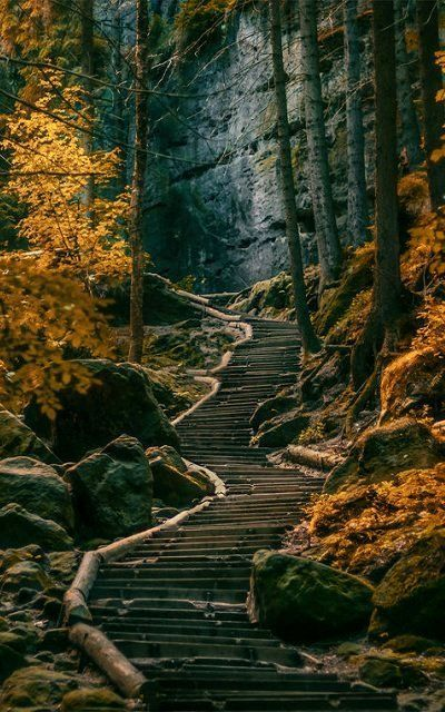 Good Morning Sunday Wallpaper With Quotes Dark Forest S 228 Chsische Schweiz Germany Pictures Photos