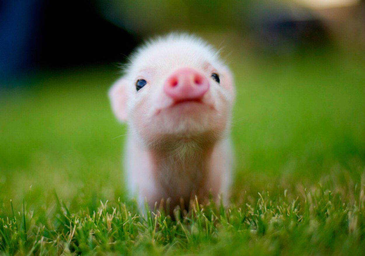 Cute Wallpapers Of Piglet And A Bunny Cute Baby Piggy Pictures Photos And Images For Facebook