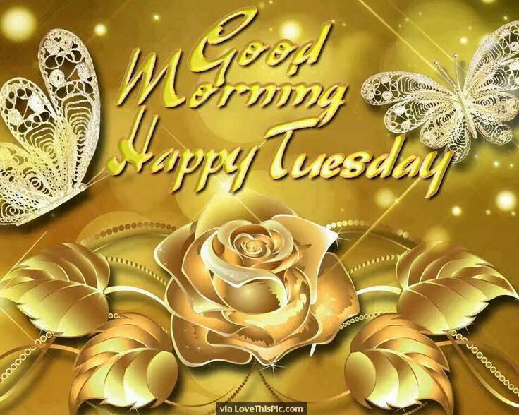 Happy Fathers Day Quotes Wallpaper Good Morning Happy Tuesday Gold Rose Image Quote Pictures