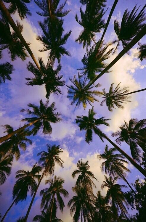 Miami Beach Wallpaper Hd Palm Tree Sky Pictures Photos And Images For Facebook